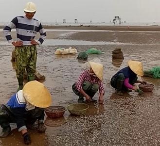 Người dân thu dọn số ngao chết để làm sạch môi trường. Ảnh: N.D.