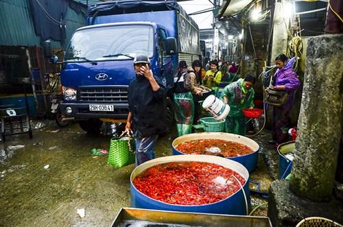 Sáng sớm 19/1 (22 tháng Chạp) tại lối vào chợ nhiều người bắt gặp nhiều bể cá vàng với màu đỏ, vàng,...