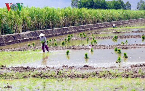 Mô hình tôm – lúa đã chứng minh được hiệu quả và được chính quyền địa phương cho phép chuyển đổi.