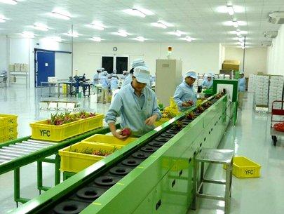 Xử lý trái cây xuất khẩu bằng công nghệ hơi nước nóng