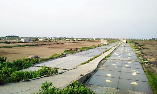 Cánh đồng muối xã Hòa Lộc kém hiệu quả