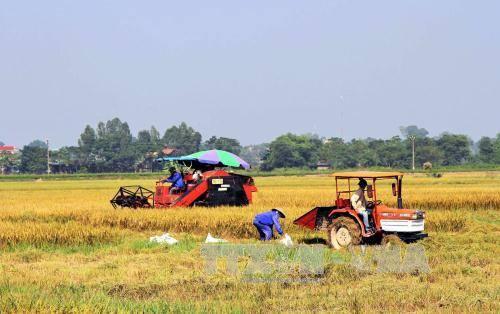 Thu hoạch lúa trên cánh đồng mẫu lớn ở xã Tân Việt, thị xã Đông Triều, Quảng Ninh. Ảnh: Văn Đức/TTXVN
