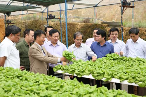 Phó Thủ tướng Vương Đình Huệ thăm khu nhà sản xuất rau bó xôi công nghệ cao có thời gian từ ươm giống tới thu hoạch chỉ trong 15 ngày của HTX Tân Tiến, Lâm Đồng. Ảnh: VGP/Thành Chung