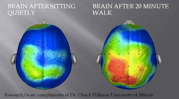 Não bộ trước và sau khi tập luyện thể dục, một bài tập đi bộ 20 phút