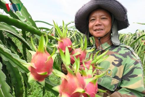 Ông Nguyễn Thanh Nghị, nông dân huyện Hàm Thuận Nam phấn khởi vì bán 10 tấn thanh long với giá cao.