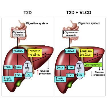 Ăn kiêng thấp calo tạo ra 3 cơ chế chuyển hóa trong gan, có thể giúp mức đường huyết hạ xuống chỉ trong 3 ngày.