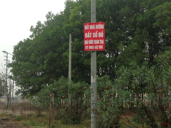 """Hàng loạt tấm biển thông tin nhà đất mọc lên quanh """"siêu đô thị"""" vệ tinh Hòa Lạc."""