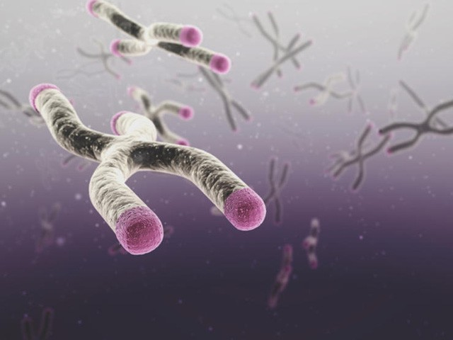 Telomere là đoạn cuối trong nhiễm sắc thể đóng vai trò như chiếc đồng hồ sinh học của cuộc đời