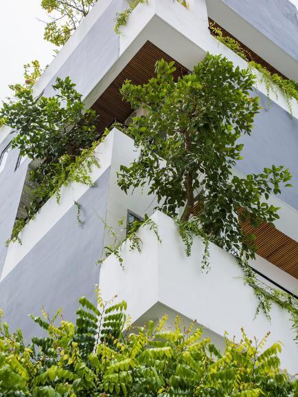 Cây xanh mọc lên tua tủa từ ban công các phòng trên tầng.