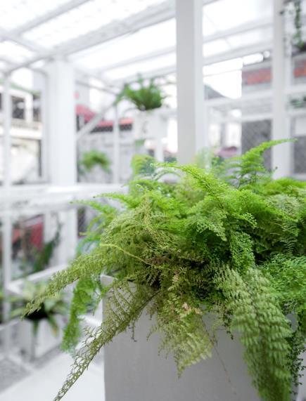 Cây xanh được trồng trong các chậu cây nhỏ đặt đan xem khung thép.