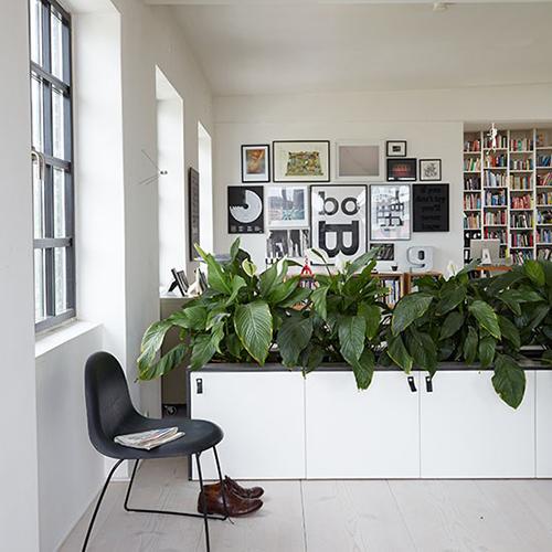 Cây xanh kết hợp tủ đựng đồ vô cùng thuận tiện cho chủ nhà.