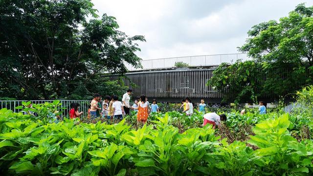 Các thầy cô có thể trồng các loại cây xanh, rau sạch cho bữa ăn của trẻ. Các bé cũng sẽ được hướng dẫn để tham gia vào việc trồng rau sạch.