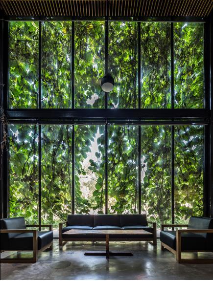 Góc tiếp khách tuyệt đẹp với giàn cây bao phủ bên ngoài.
