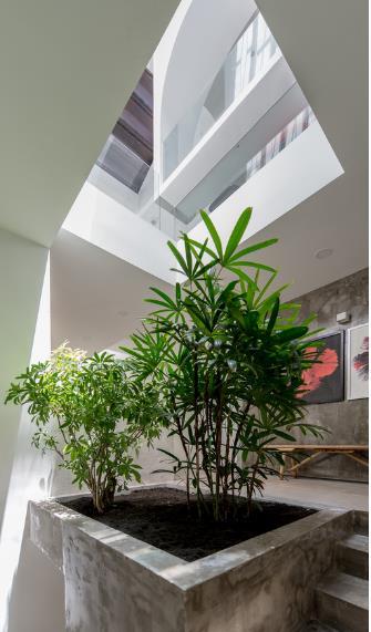 Cây xanh được trông khắp mọi ngõ ngách trong nhà.