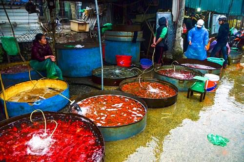 Theo một tiểu thương, giá cá vàng năm nay nhỉnh hơn năm trước và cá cũng đẹp mã hơn.