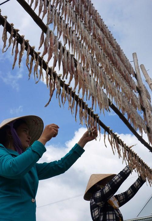 Cá khô khoai loại ngon, con lớn đã đạt 450.000đ/kg, cao nhất từ trước đến nay