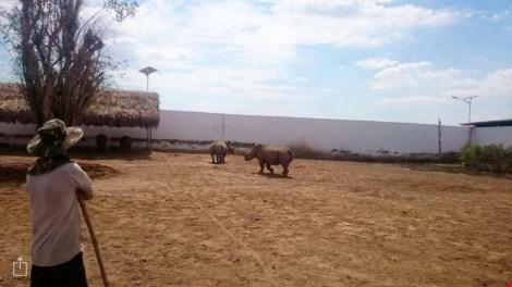 Tê giác tại Vườn thú Mỹ Quỳnh (Ảnh: Báo Dân Việt)