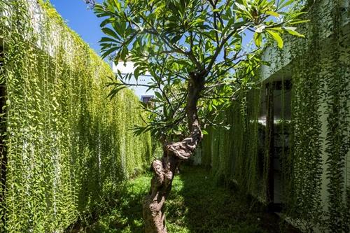 Chủ nhân của ngôi nhà là gia đình 4 người, họ rất yêu thiên nhiên và sự tươi mát của màu xanh cây cỏ. Chính vì vậy phần lớn diện tích chủ nhà ưu tiên cho cây xanh.