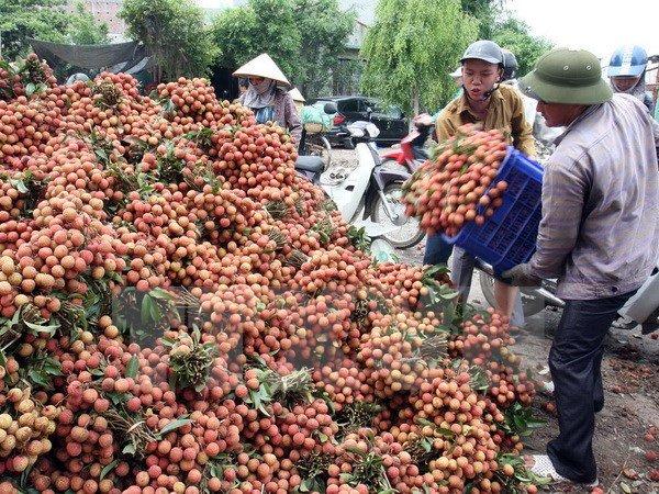 Hoa quả Việt yếu khâu chế biến và đóng gói sau thu hoạch là lý do dẫn giá rẻ