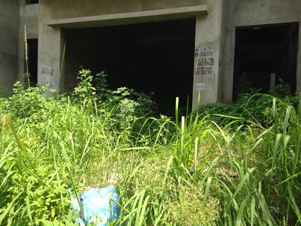 Nhiều nhà lỗ nặng sau khi rau bán