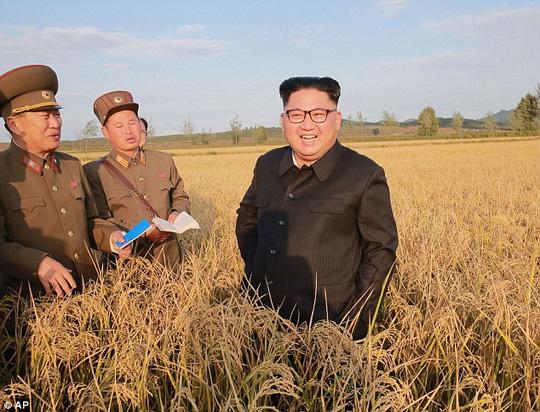Nhà lãnh đạo Triều Tiên Kim Jong-un thăm cánh đồng lúa. Ảnh: AP