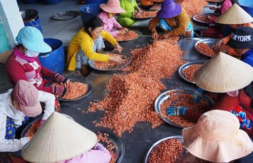 Các cơ sở chế biến tôm khô Rạch Gốc sản xuất không đủ bán