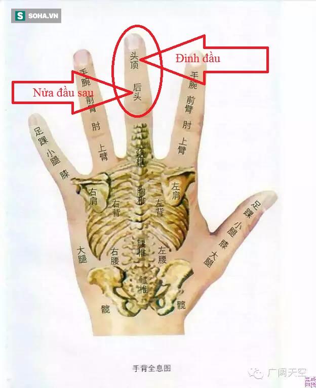 Mô hình thu nhỏ cơ thể trên bàn tay giúp Đông y phòng và chữa bệnh hiệu quả (Ảnh minh họa).