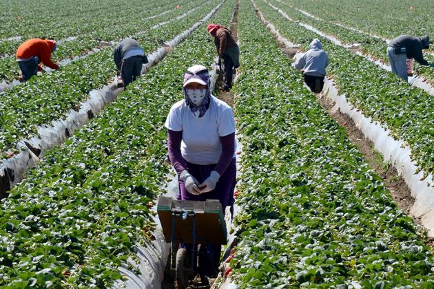Ở những nước phát triển như Mỹ, người nhập cư làm những công việc mà người bản địa không muốn làm, ví dụ như trồng trọt, thu hoạch