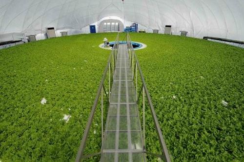 Tín dụng nông nghiệp công nghệ cao đòi hỏi sự tính toán chi tiết và trường vốn