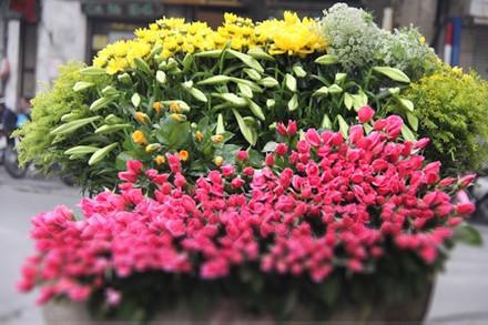 Không rực rỡ như hồng, cúc..., hoa loa kèn mang màu sắc dịu dàng.