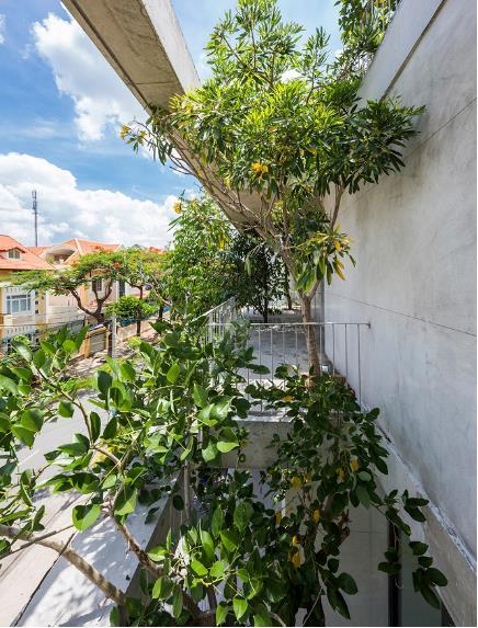 Không chỉ được trồng ở dưới mặt đất, những cây thân to, tán rộng còn được trồng xen kẽ ở khắp mọi nơi trên tầng 2 và tầng 3.
