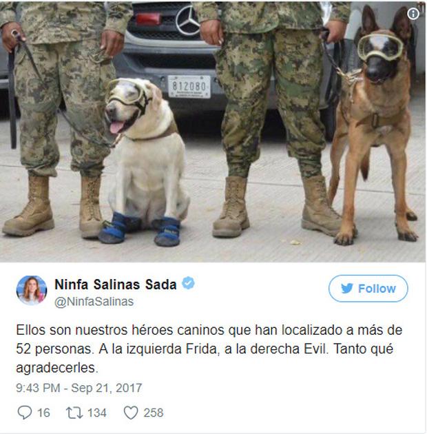 Họ là những anh hùng 4 chân của chúng tôi. Bên trái là Frida, bên phải là Evil, họ đã giúp chúng tôi rất nhiều, cảm ơn nhiều - tài khoản Ninfa Salinas Sada chia sẻ.