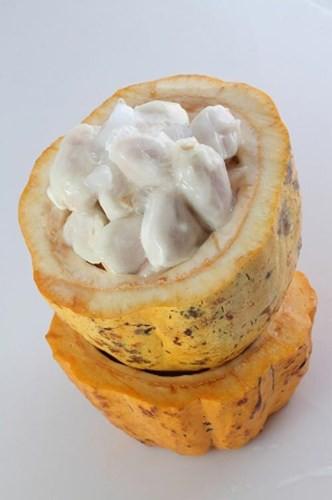 Thịt của ca cao trắng bám lấy hạt, ăn có vị chua ngọt (nghiêng về ngọt) khá giống với mãng cầu xiêm, nhưng ăn ca cao thì thơm hơn rất nhiều khiến nhiều người thích thú.