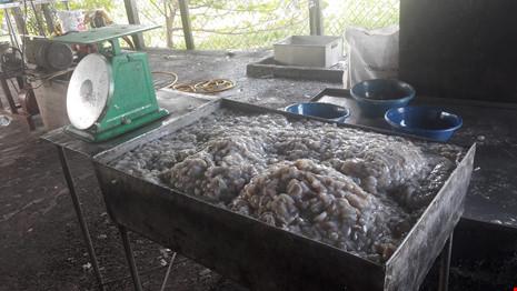 Hai cơ sở chế biến cà phê và khô cá bị bắt quả tang