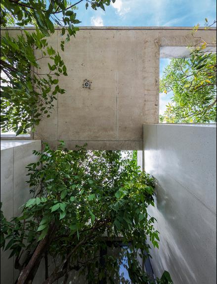 Trong ngôi nhà này cây xanh được tự do phát triển, vươn cao, đổ tán rộng nhờ những lỗ hổng khoét sẵn thông qua các tầng.