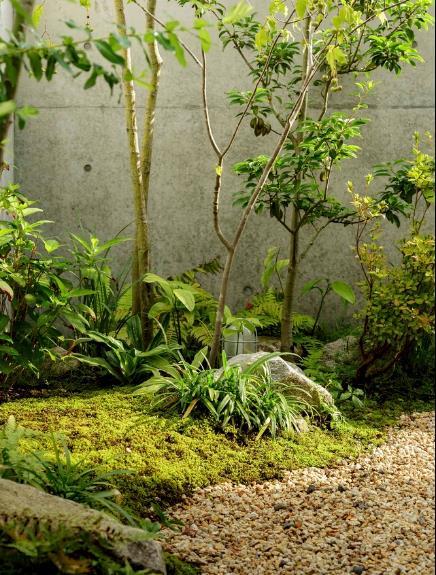 Cây trong vườn không hề cầu kỳ toàn là những loại cây dễ trồng và dễ chăm sóc.