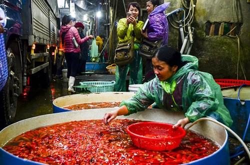 Để phục vụ ngày tiễn Táo quân về trời, mỗi ngày chợ cá Yên Sở buôn bán lên tới hàng tấn cá vàng.