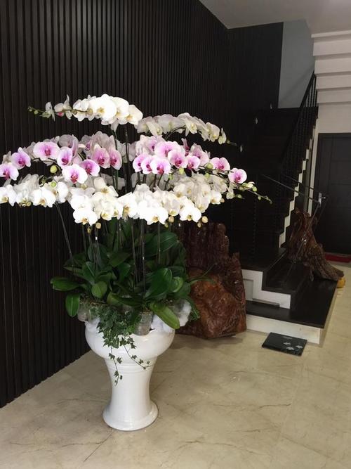 Quang Tèo cho biết, căn nhà này là thành quả sau nhiều năm hoạt động nghệ thuật của mình.