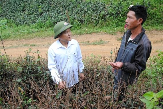 Không chỉ dứa, nhiều diện tích chè Shan Tuyết cũng bỗng dựng rụng lá, chết khô