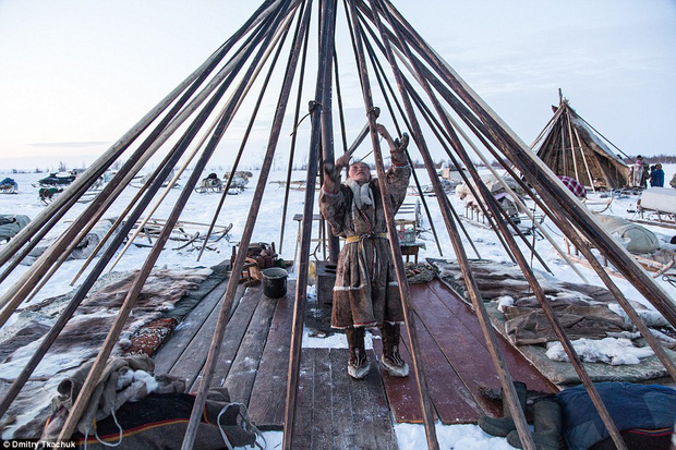 Lều chóp nón được người Nenets sử dụng để ứng phó với thời tiết lạnh giá.