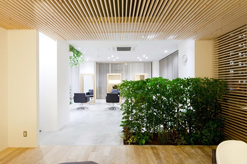 Không gian ngôi nhà trở nên thoáng rộng, mát mắt với bức tường cây được trồng thẳng hàng.