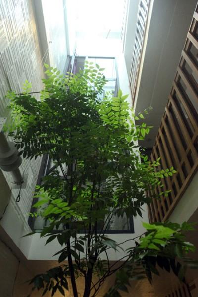 Còn đây là ngôi nhà ống đặc biệt nằm trong một con hẻm nhỏ ở thủ đô Hà Nội.