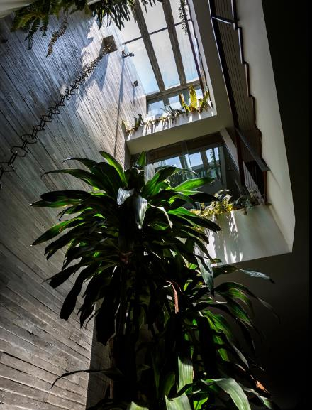 Xung quanh khu vực giếng trời trên các tầng được trồng cây xanh và mái nhà được lợp kính trong suốt.