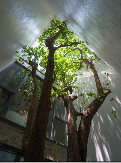Cây xanh là yếu tố đặc biệt quan trọng trong ngôi nhà này, nó xuất hiện ở khắp mọi nơi mang đến màu xanh tươi mát và không khí trong lành cho con người.