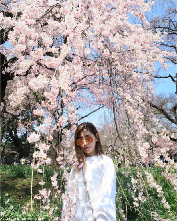 Đang ngao du trời Tây nhưng cô không quên bay về để kịp chiêm ngưỡng mùa hoa anh đào Nhật Bản.