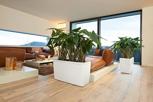 Bầu không khí trong ngôi nhà sẽ trở nên sạch sẽ và dễ chịu hơn nhờ những vách ngăn xanh này.