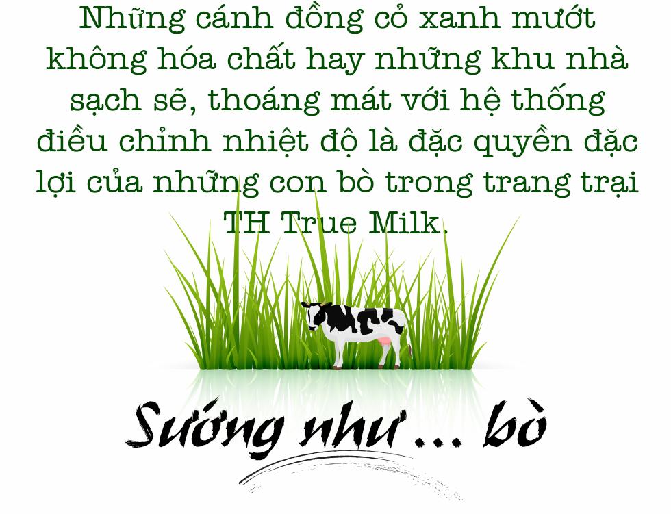 Cuộc sống như mơ của những cô bò hạnh phúc trong trang trại TH True Milk - Ảnh 1.