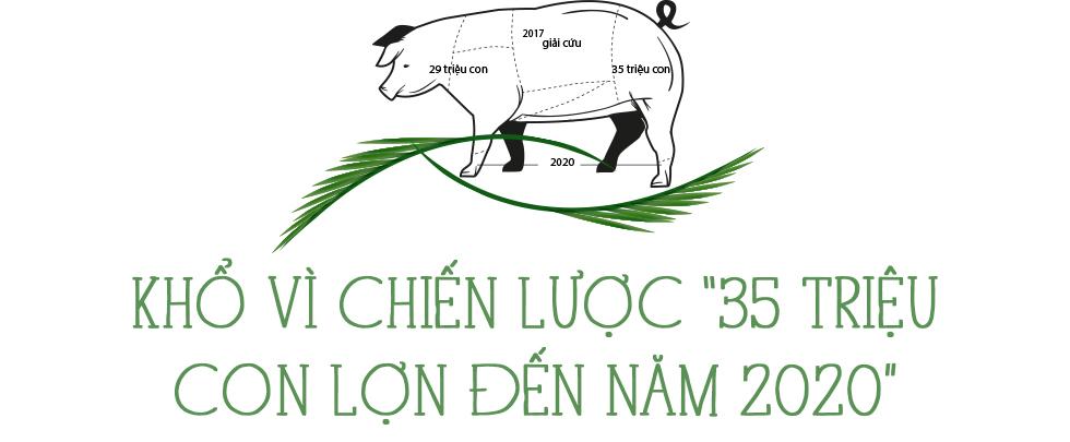 Những con lợn đói ở trung tâm nuôi lợn lớn nhất miền Bắc - Ảnh 9.