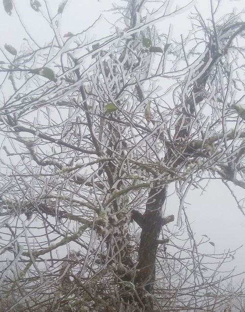 Sa Pa bất ngờ xuất hiện tuyết rơi dày đặc trong sáng nay - Ảnh 11.