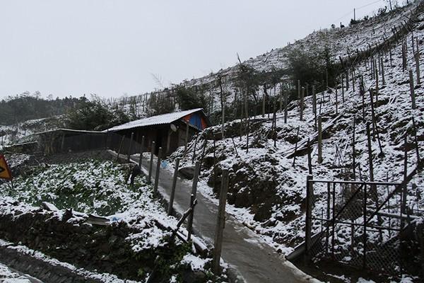 Sa Pa bất ngờ xuất hiện tuyết rơi dày đặc trong sáng nay - Ảnh 7.